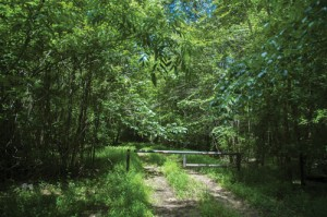 Bottomland hardwood forest on Great Pee Dee protected