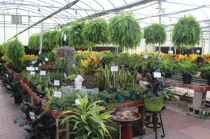 Still growing: Forest Lake Greenhouses under new ownership