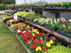 In full bloom: Market set for annual flower and plant sale