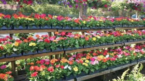 Fall Plant and Flower Festival at Farmers Market