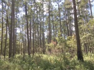 Pee Dee Land Trust protects the Mary Longs Tract