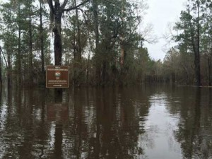 Flooding may affect public access during hog hunting seasons