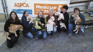 ASPCA grant helps Darlington Humane  Society transport animals for adoption
